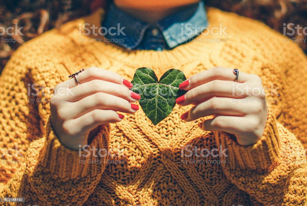 Herzförmiges Blatt  – Foto