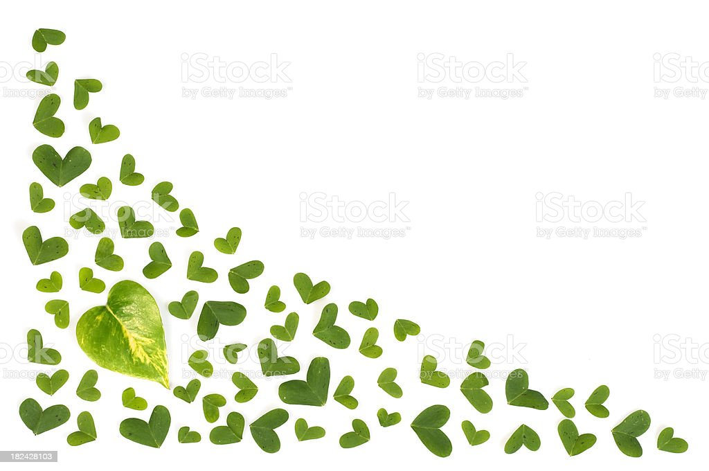 Heart shaped leaves royalty-free stock photo