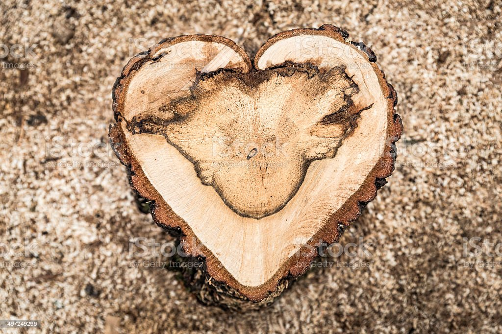 Heart shaped oak tree trunck crosscut background - stock image stock photo