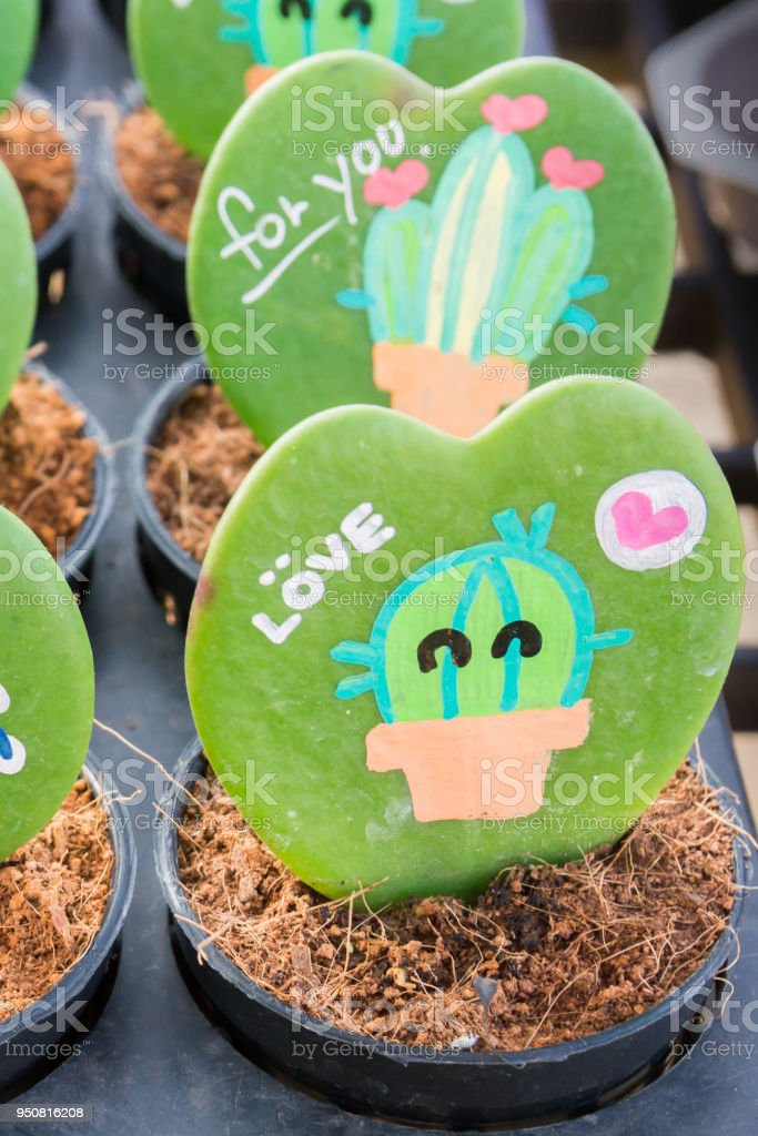 Heart shaped plant (Kerrii Hoya) with painted roses and message of love in pot.  important day theme stock photo