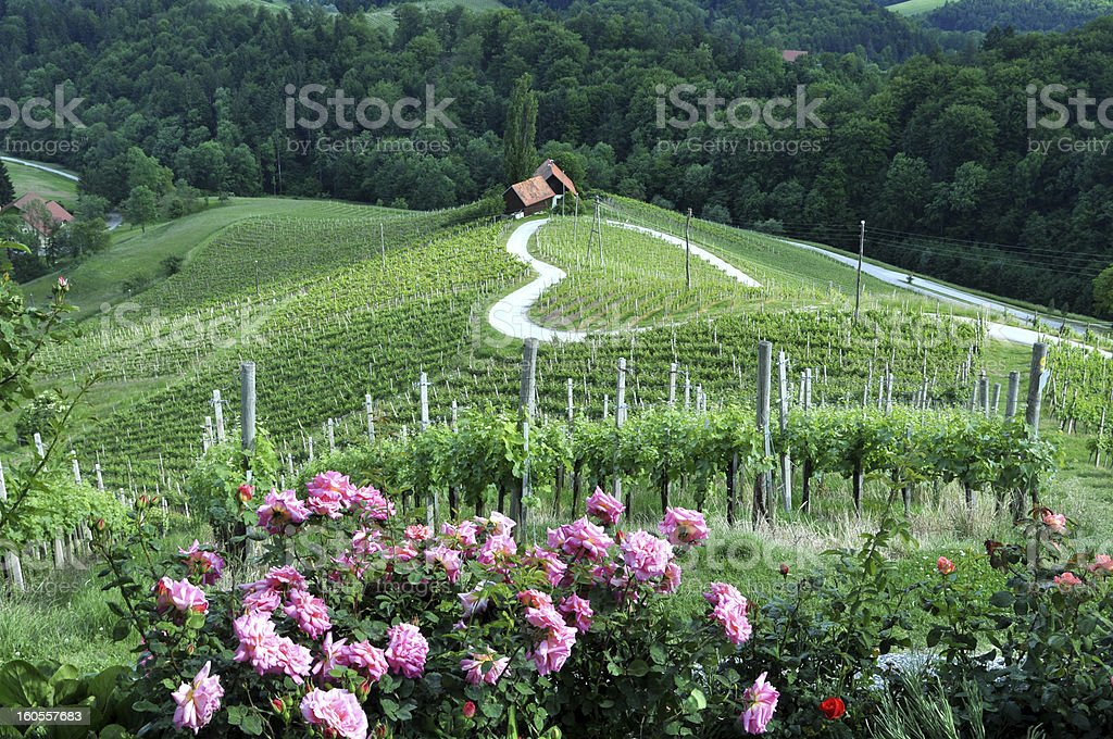 Heart shaped road in the winelands stock photo