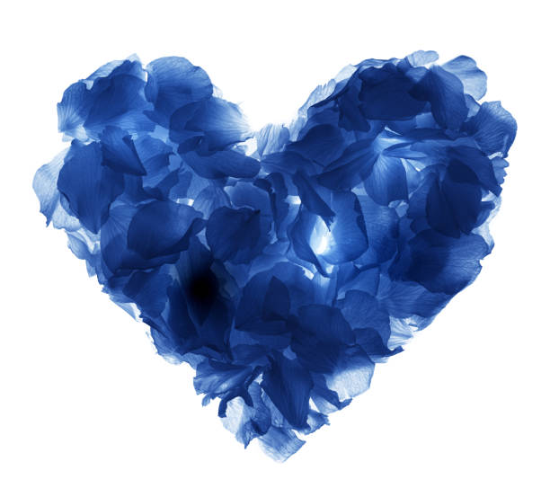 Heart shaped rose petals against white picture id996564196?b=1&k=6&m=996564196&s=612x612&w=0&h=8wln7tkc88zkwagpxd9qdxzqrd 8ec9zvdhuss3sqkk=