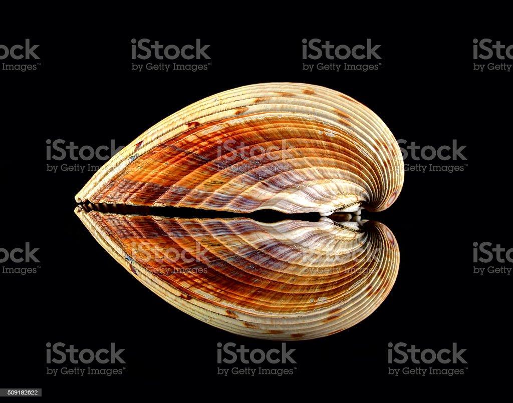 Carcasa en forma de corazón de reflejo - foto de stock
