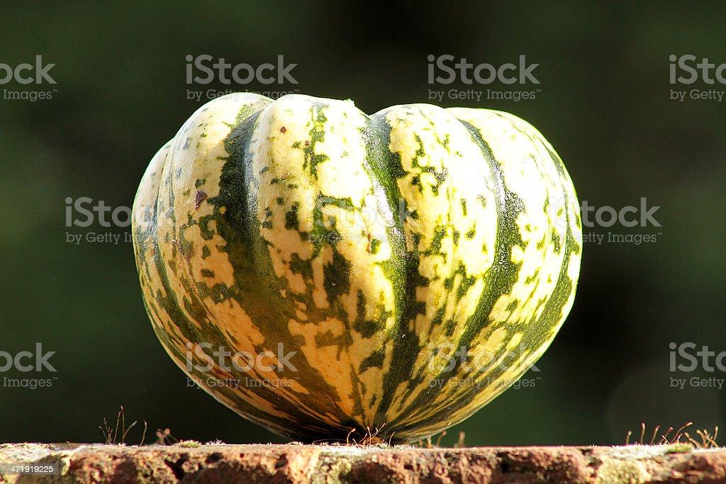Heart Shaped Sweet Dumpling Squash stock photo