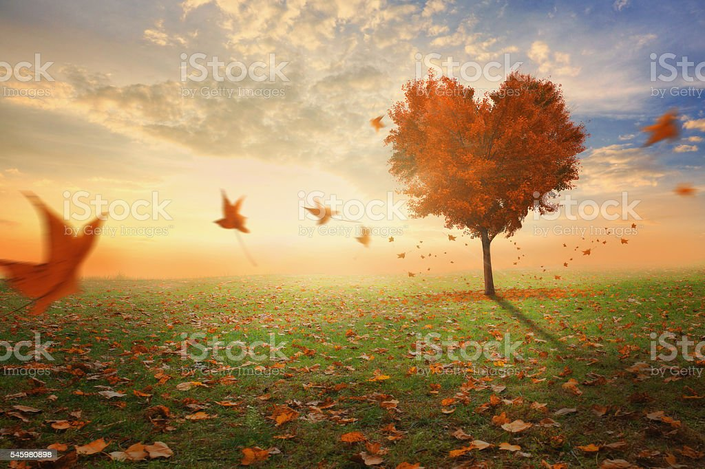 Heart shaped tree during fall – Foto