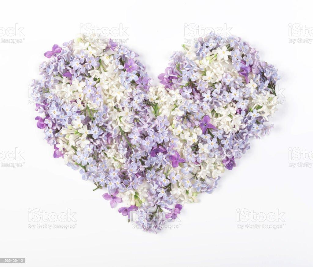 心的象徵, 由春天的丁香花在白色背景上隔絕。平躺。頂部視圖。 - 免版稅丁香花圖庫照片