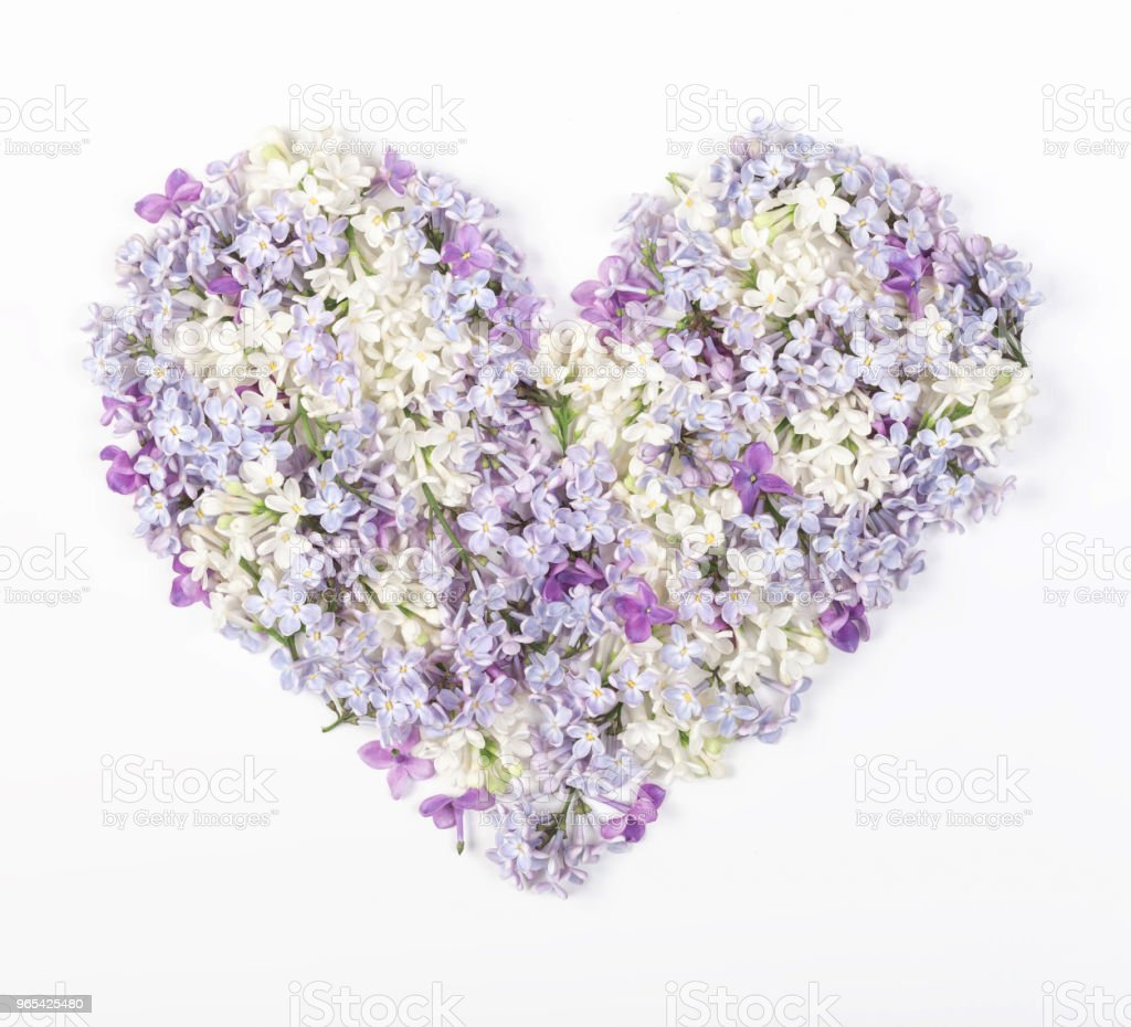 Heart symbol made of spring lilac flowers isolated on white background. Flat lay. Top view. zbiór zdjęć royalty-free