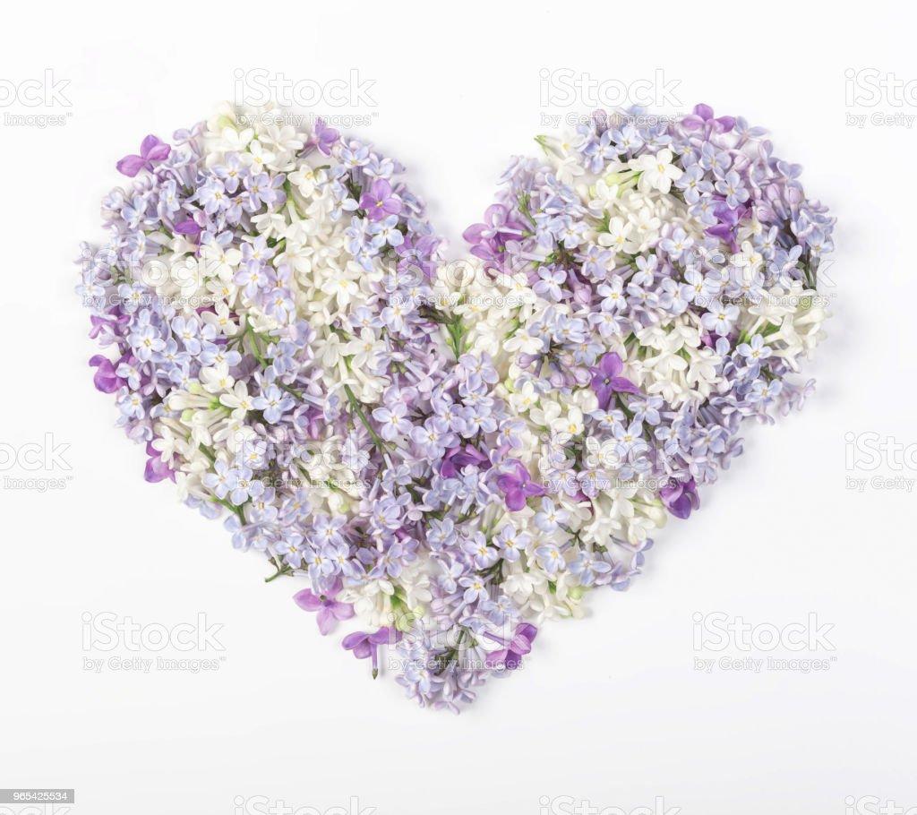 Heart symbol made of spring lilac flowers isolated on white background. Flat lay. Top view. royalty-free stock photo