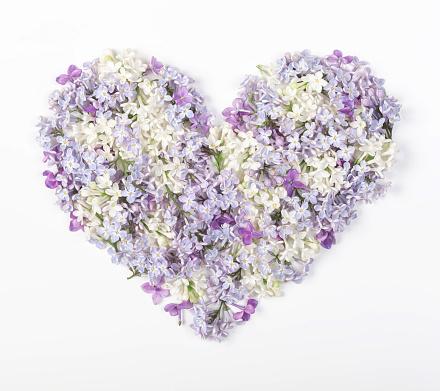 흰색 바탕에 라일락 꽃 절연 봄 심 혼 상징에 의하여 이루어져 있다 플랫이 하다 최고의 볼 수 있습니다 공휴일에 대한 스톡 사진 및 기타 이미지