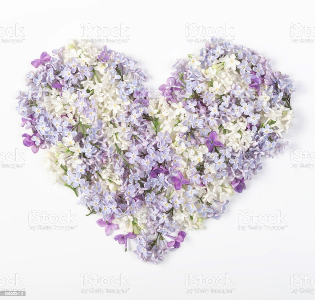 Heart symbol made of spring lilac flowers isolated on white...