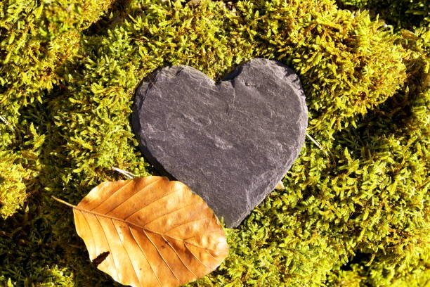 Heart sympathy or funeral heart, Blank slate heart lying in moss. copy space for text. Natural burial grave site, showing blank memorial plaque on grass or moss. tree burial and All Saints Day concept stock photo