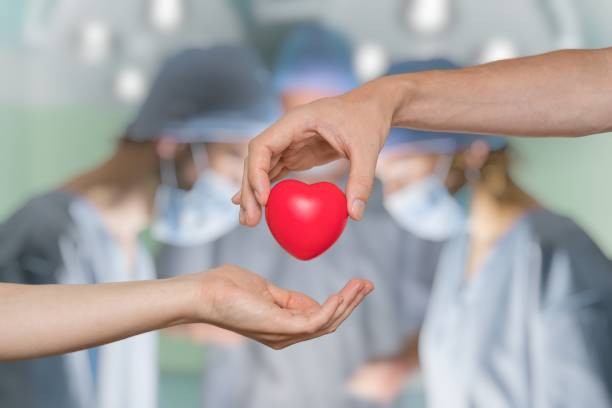 Heart transplant and organ donation concept. Hand is giving red heart. stock photo