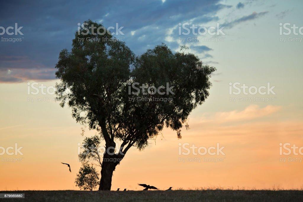 Heart Tree at sunset stock photo
