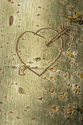 Heart with Arrow Engraved in the Trunk of a Tree - Corazon con Flecha  Grabado en el Tronco de un Arbol