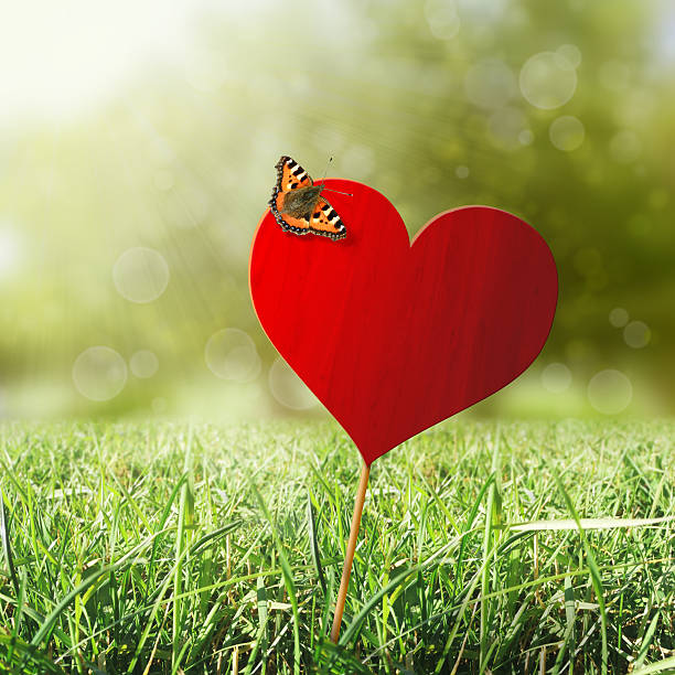 Heart with butterfly stock photo