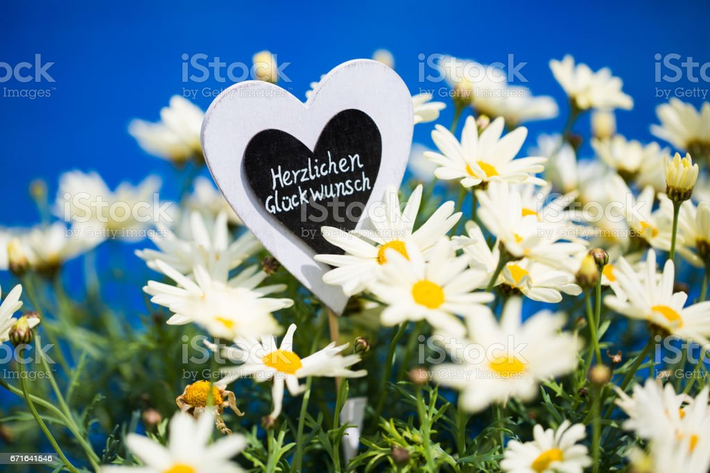 Heart with Margeriten, text, 'Congratulations', blue Background stock photo