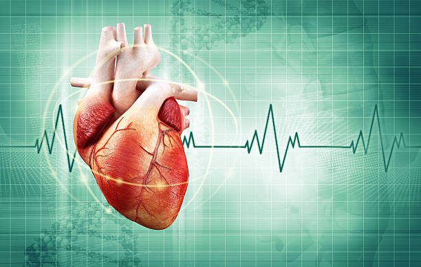 heartbeat - human heart stock photos and pictures
