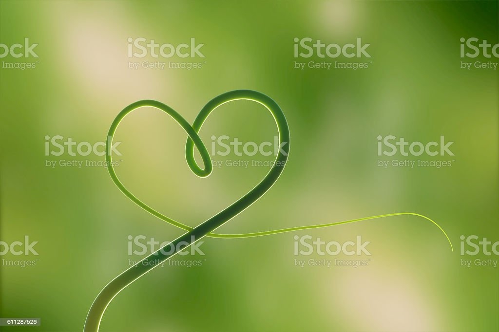Hearth of the nature which is consist of the wonderful leaf. stock photo
