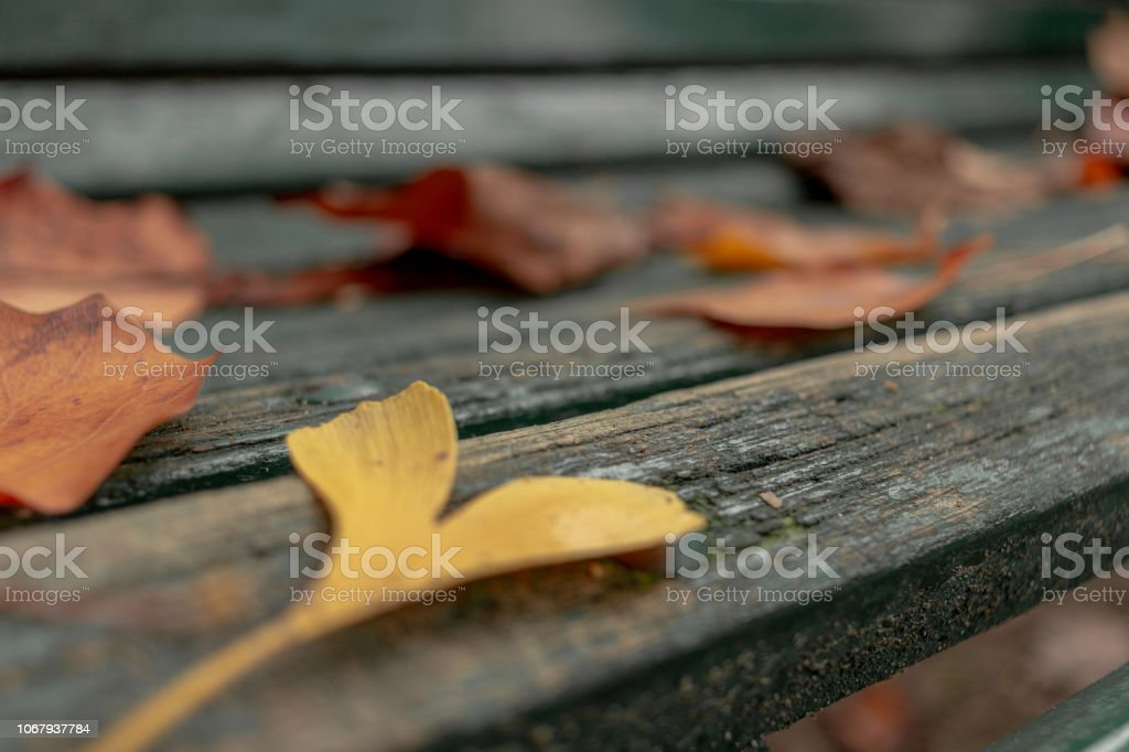 Hearth Yellow Leaf on a Bench - foto stock