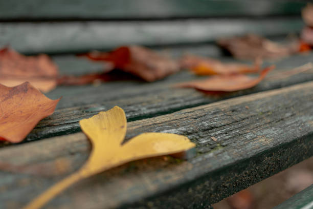 hearth yellow leaf on a bench - monica pirozzi foto e immagini stock
