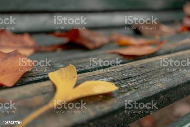 Photo of Hearth Yellow Leaf on a Bench