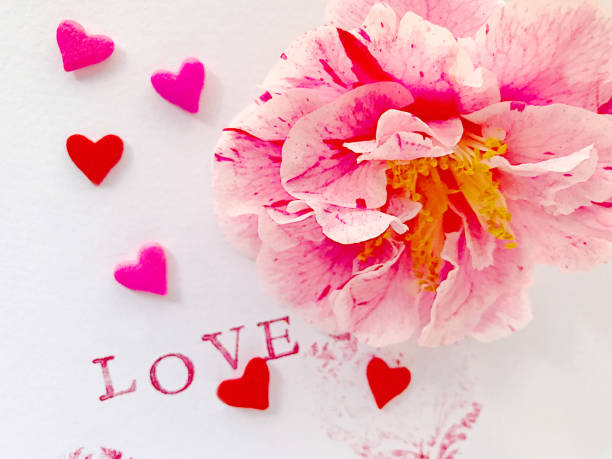 Hearts, flower and love Fresh camellia with love words and stamped and candy hearts sentimentality stock pictures, royalty-free photos & images