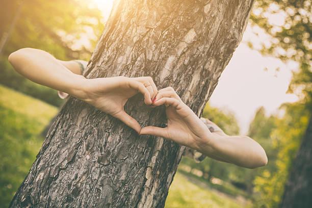 herz-form für die natur. - liebesbaum stock-fotos und bilder