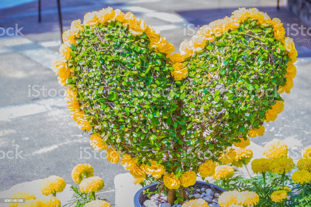 Heartshaped Bonsai With Yellow Flowers Decorated In The Garden Green Bonsai Tree In The Form Of A Heart With Yellow Flower Stock Photo Download Image Now Istock