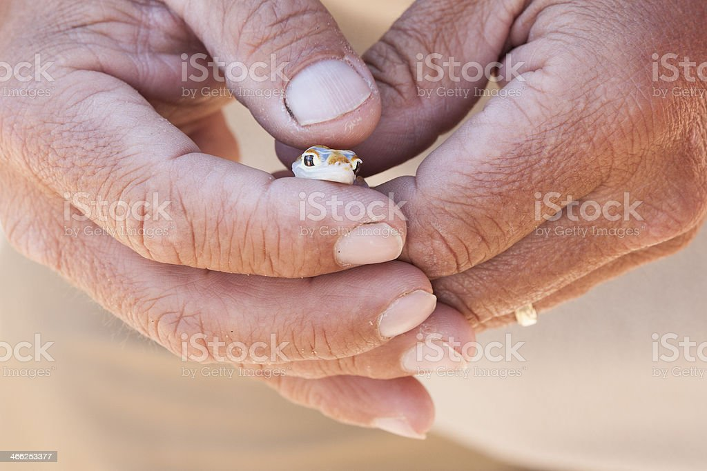 Heart-shaped hands hold a tiny gecko stock photo