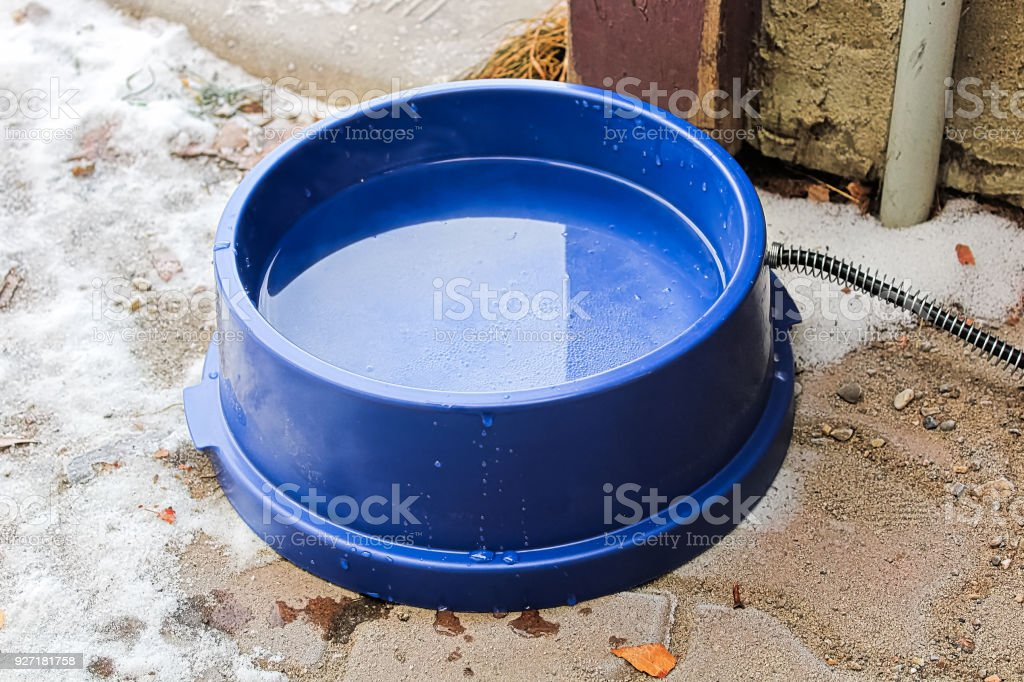 A heated dog bowl outside in winter stock photo