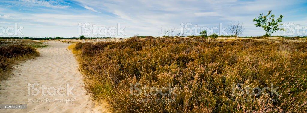 Heide en zand pad in nationaal park Loonse en Drunense Duinen, Nederland. Panorama foto