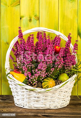 948743278istockphoto Heather flowers in basket isolated on rustic wood background. 495602936