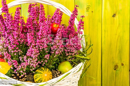 948743278istockphoto Heather flowers in basket isolated on rustic wood background. 495603838
