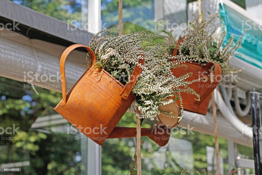 Heather in a hanging rusty watering can stock photo