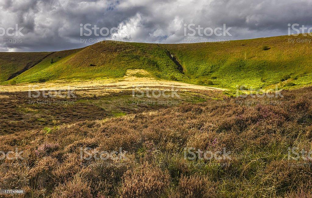 Heather in bloom, North York Moors, Goathland, Yorkshire, UK. royalty-free stock photo