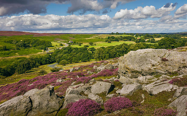 Heather in bloom over the moors, Yorkshire, UK. Goathland, Yorkshire, UK. Heather in bloom over the North York Moors national park showing the undulating landscape with rocks, trees, and isolated farmhouse in autumn near Goathland, Yorkshire, UK. moor stock pictures, royalty-free photos & images