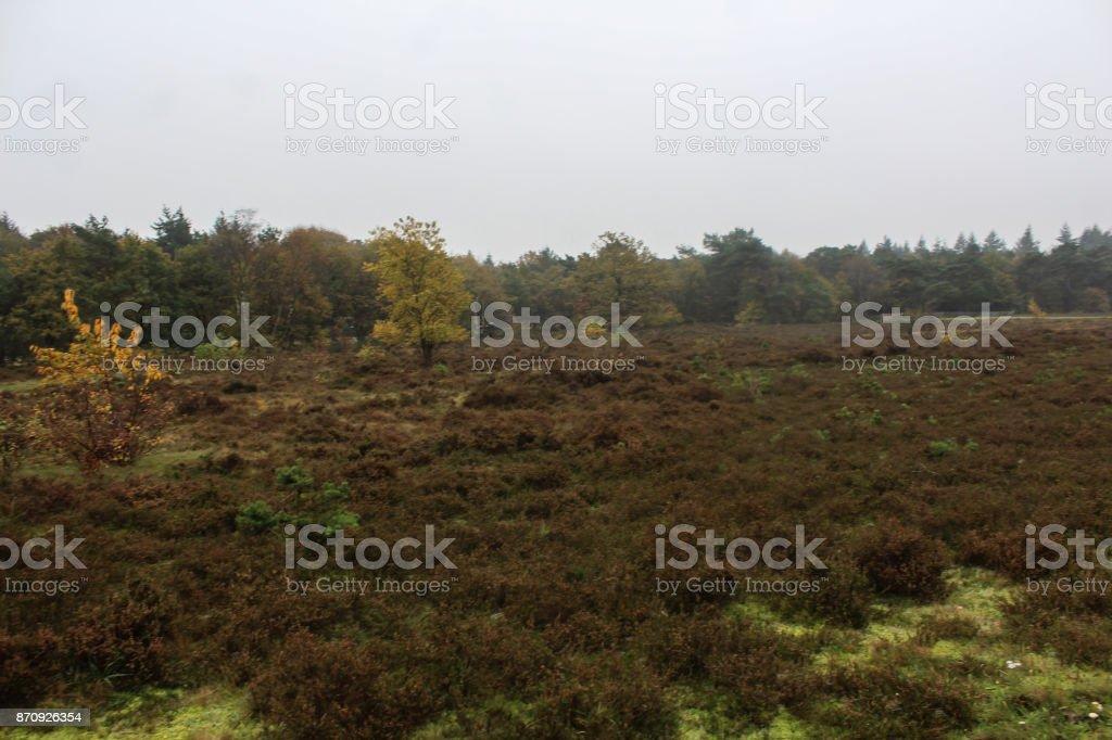 Heather landscape in autumn, National park the veluwe stock photo