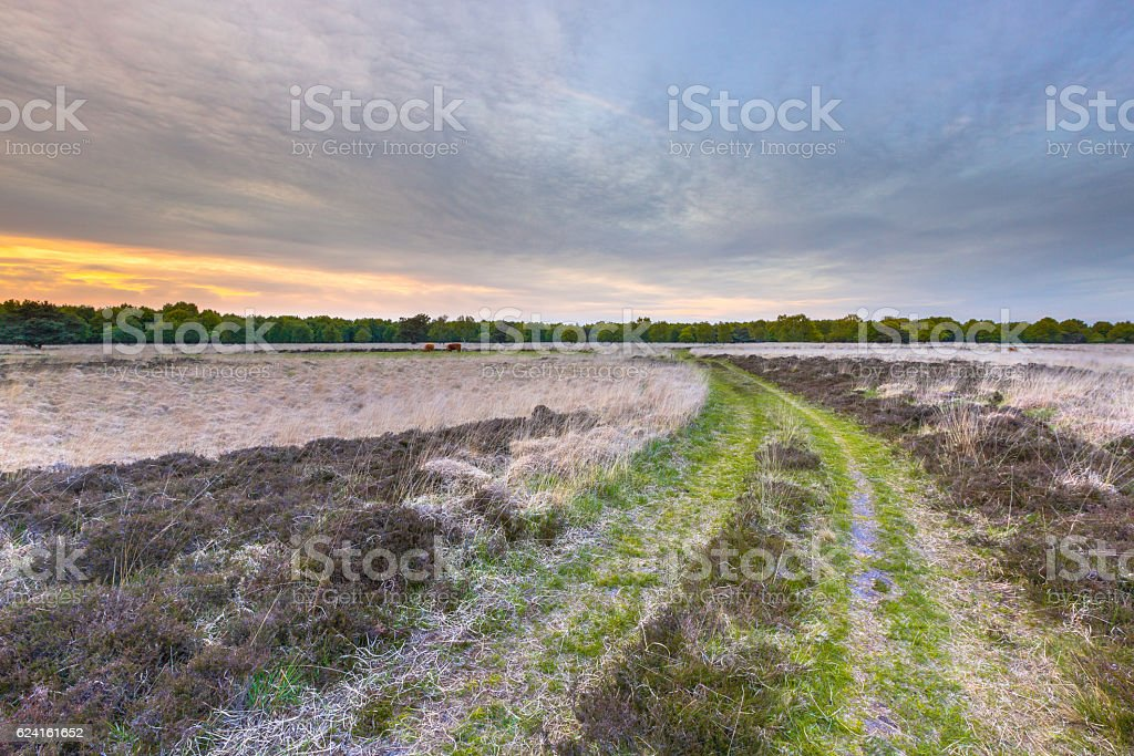 Heathland at Ballooerveld during sunset stock photo