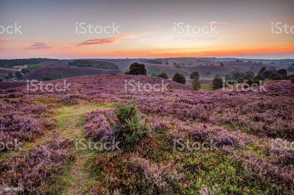 Heathland landscape at sunrise stock photo