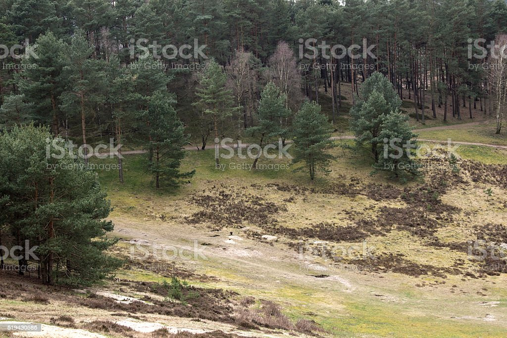 Heide Landschaft im Frühling - Heathland landscape in spring stock photo