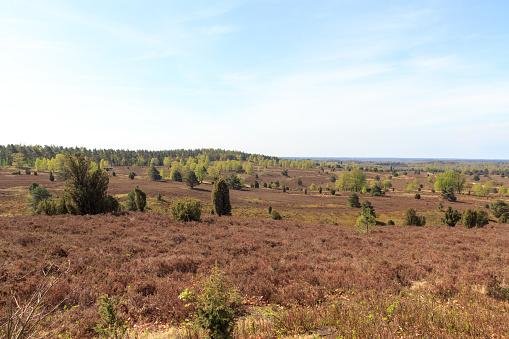 Heathland panorama view from hill Wilseder Berg in Lüneburg Heath near Undeloh, Germany