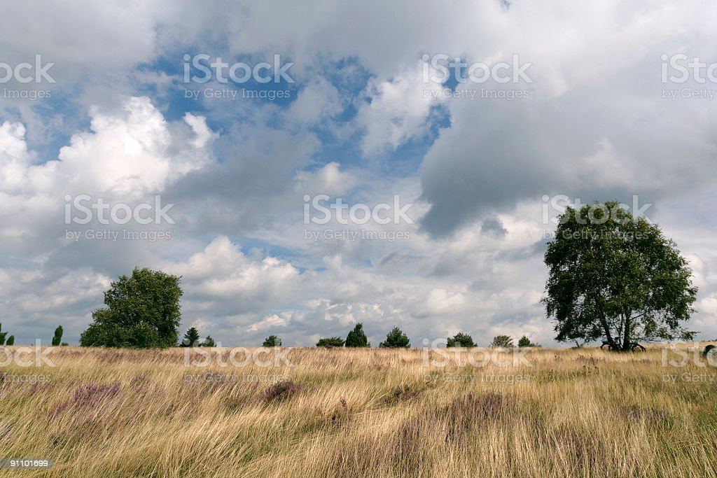 Heathland with birch trees and white clouds (XL) royalty-free stock photo