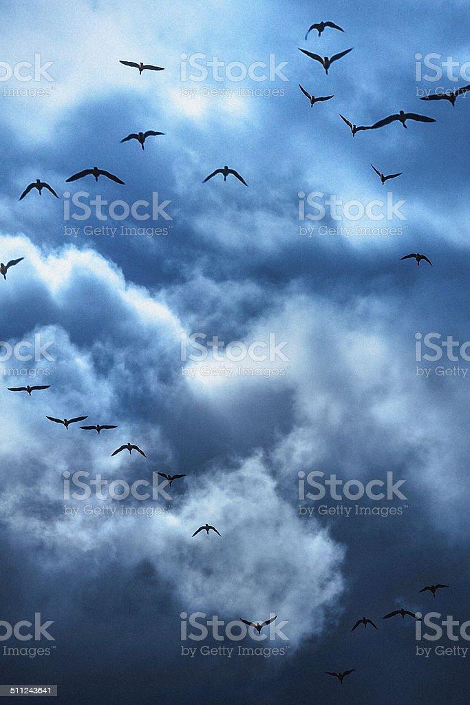 Heavenly Cloudscape Sky & Birds Flying