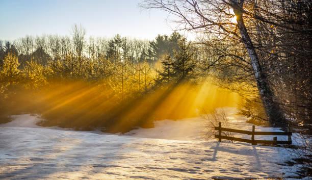 Himmlische Sonnenstrahlen mit Schatten, durch schwindende Kiefernzweige. – Foto