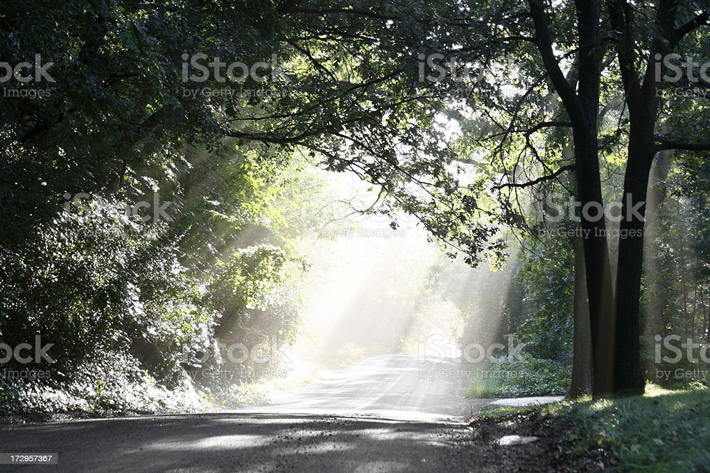 Heaven's Rays: light on a Michigan road in the woods royalty-free stock photo