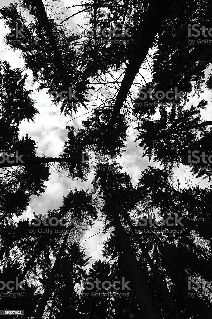 heavenward foto stock royalty-free