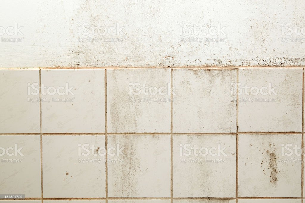 heavily soiled mouldy bathroom tiles and wall royalty-free stock photo