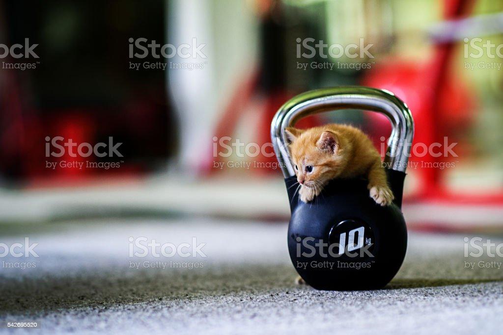 Heavy Duty Kitten stock photo