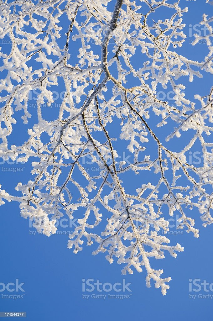 Heavy frost on branches royalty-free stock photo