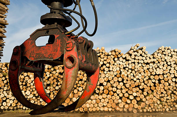 heavy lifting crane loading cut wooden logs - logging equipment stock photos and pictures
